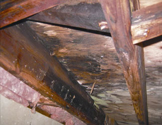 mold and rot in a Sanford crawl space
