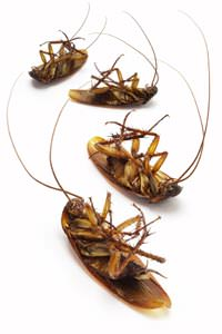 Cockroach Extermination in Fayetteville
